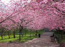 Pomlad – nova rast