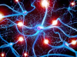 nevrotransmiterji